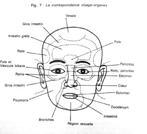 zones du visage